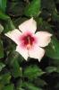 bloemen_478