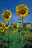 bloemen_479