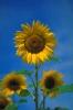 bloemen_480