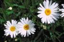bloemen_481