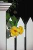 bloemen_482