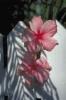 bloemen_483
