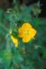 bloemen_485