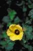 bloemen_486