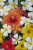 bloemen_490