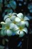 bloemen_491