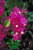 bloemen_492