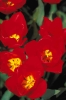 bloemen_493
