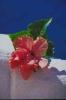 bloemen_495