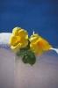 bloemen_496