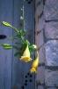 bloemen_497