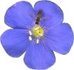 bloemen_4