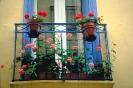 bloemen_500