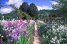 bloemen_502