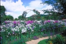 bloemen_503