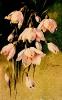 bloemen_507