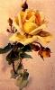 bloemen_511