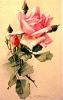 bloemen_515
