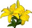 bloemen_517