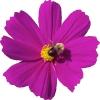 bloemen_518