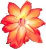 bloemen_519