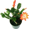 bloemen_520