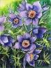 bloemen_53