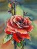 bloemen_54