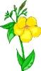 bloemen_66