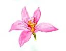 bloemen_74