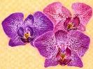 bloemen_87