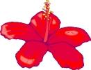 bloemen_88