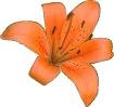 bloemen_8