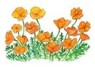 bloemen_91
