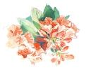 bloemen_98