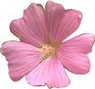 bloemen_9