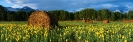 landschap_101