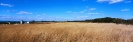 landschap_200