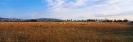 landschap_79