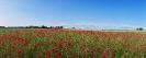 landschap_7
